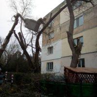 Кронирование аварийных деревьев