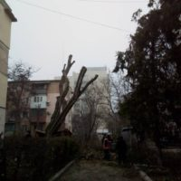 Обрезка деревьев на придомовой территории